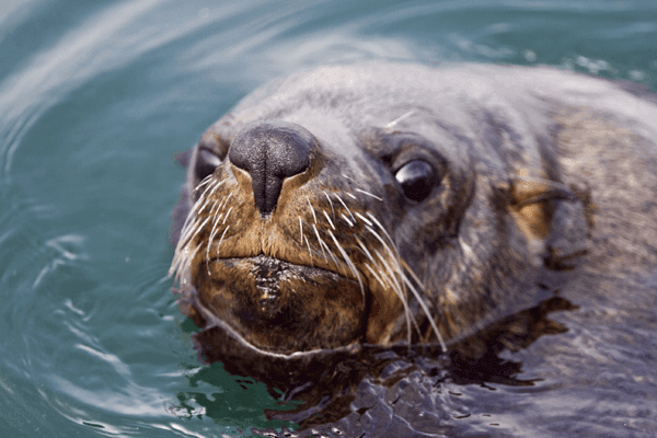 Hout Bay Seal Island Charters